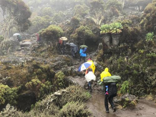Kilimangiaro